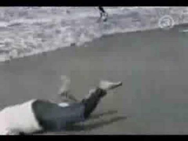 Nehody na pláži [kompilace]