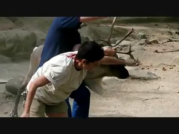 ZOO - Sob napadl ošetřovatele