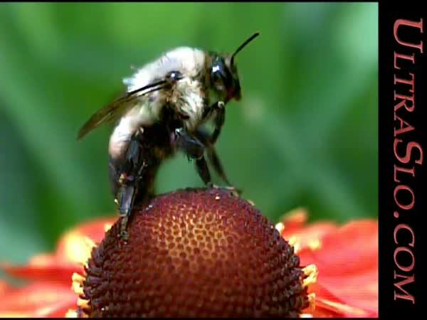Slow motion - Včela