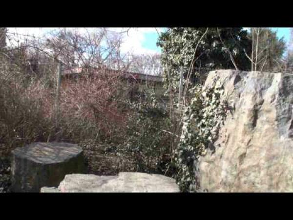 ZOO Trója - Lemur se zatoulal