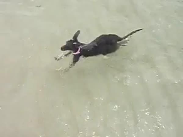 Austrálie - Jogging na pláži