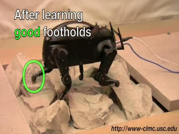 Robot - Little Dog a jeho chůze