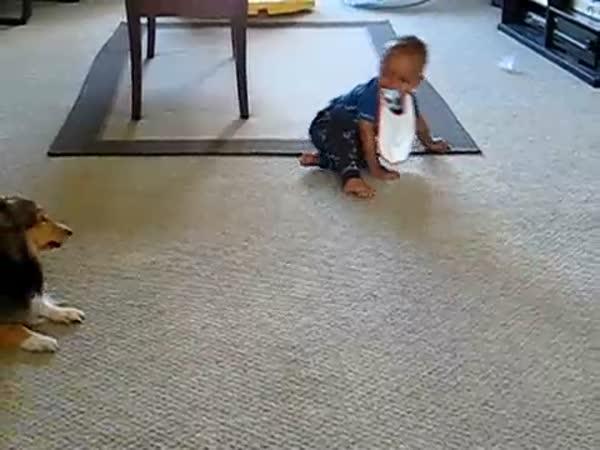 Dítě a pejsek si hrají