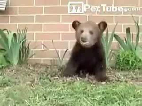 Malý medvídek má alergii