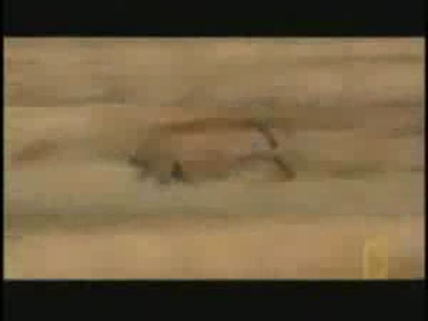 Zvířátka - videa [kompilace]