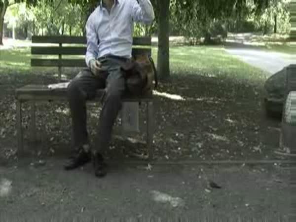 Lavička v parku a Finanční krize
