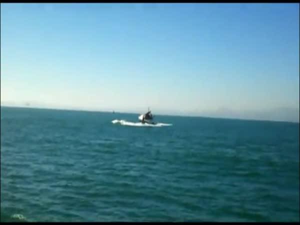 Plachetnice vs. Velryba