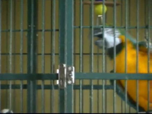 Papoušci utečou z klece