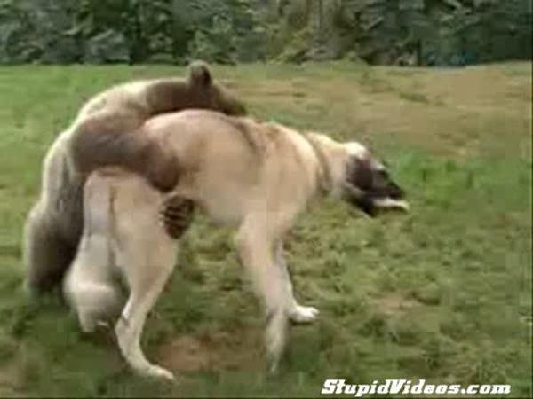 Nejlepší přátele - Pes a medvěd