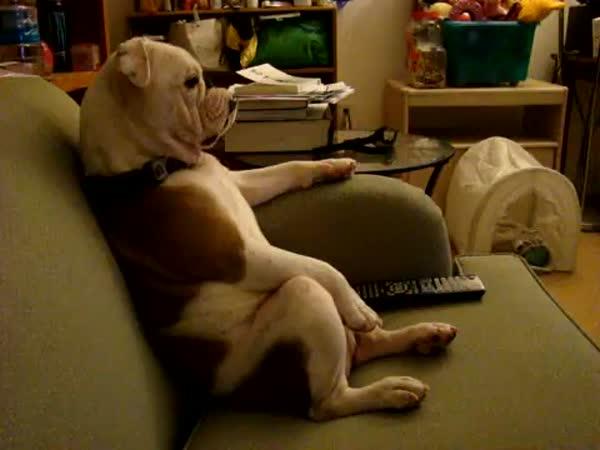Pejsek, který se dívá na televizi