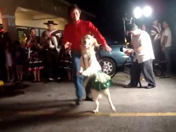 Pejsek, který umí tancovat