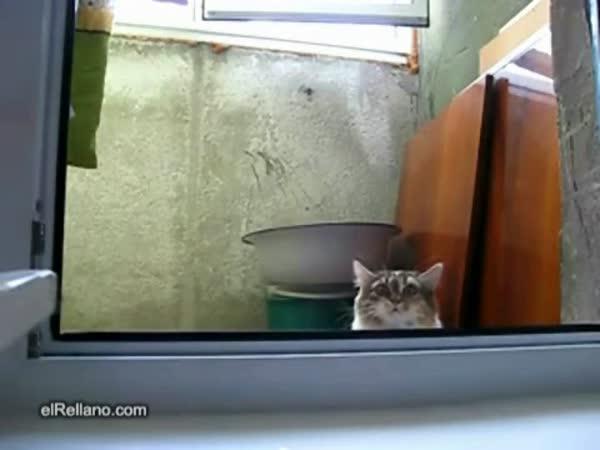 Nenápadná kočička 2