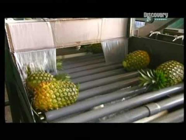 Jak se dělá Ananas