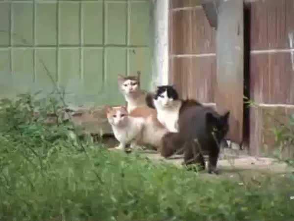 Krysa vs. Tři kočky
