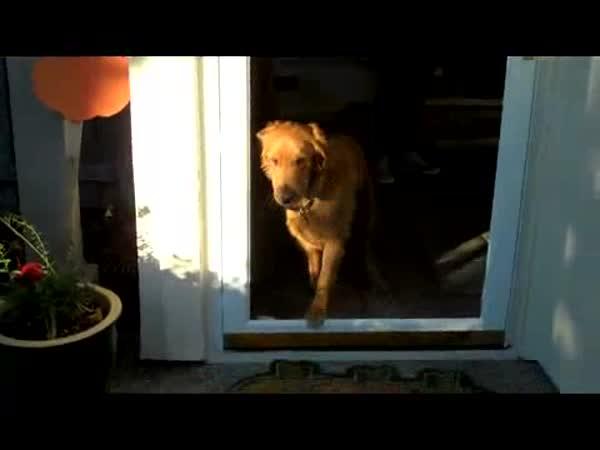 Pes vs. Skleněné dveře
