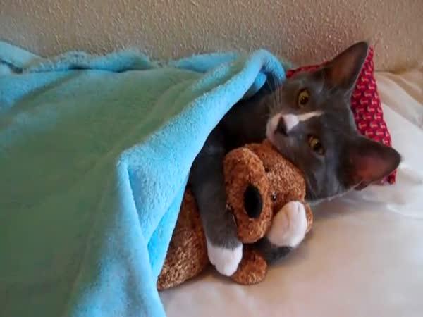 Kočka – Roztomilost sama