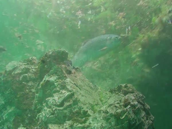 Zelené jezero