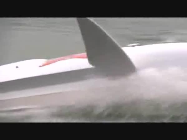 Žraločí plavidlo