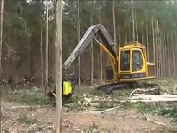 Technika – těžba dřeva pomocí stroje
