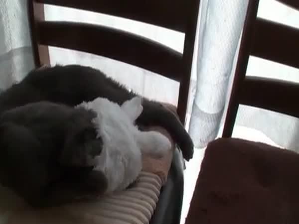 Kočka nebo králík
