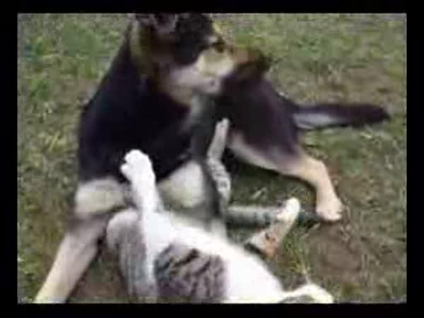 Pes a kočka se mordují