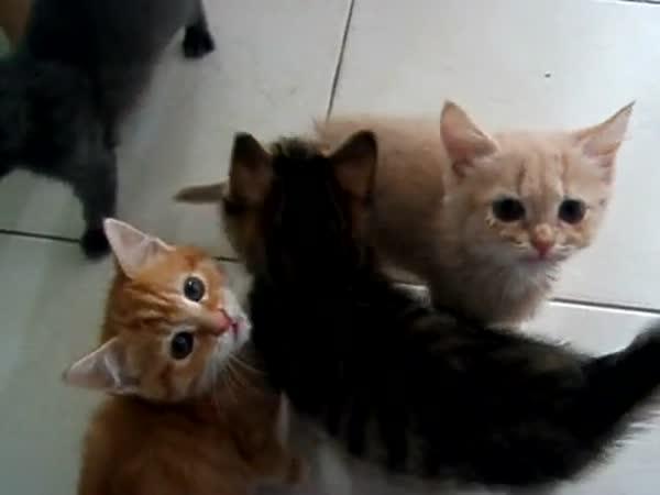 Hladová koťata