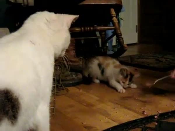 Kočka si chrání svojí večeři