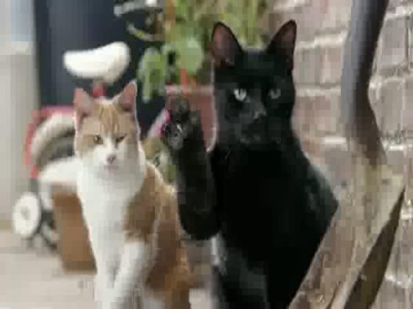 Reklama - Mléko a kočičky