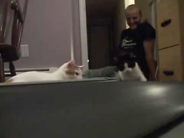 Kočky zkoumají běžící pás