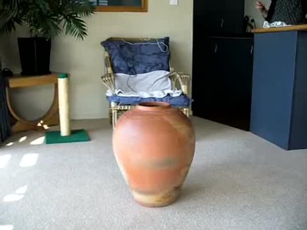 Tlustá kočka vs. váza
