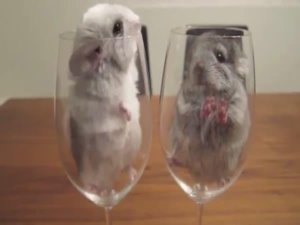 Činčily ve sklenici od vína
