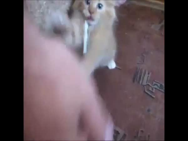 Kočka cigaretový závislák