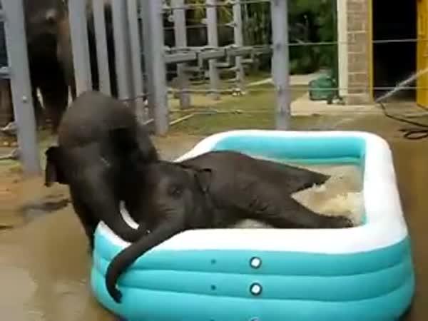 Sloní miminka se koupou
