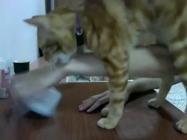 Neústupná kočka