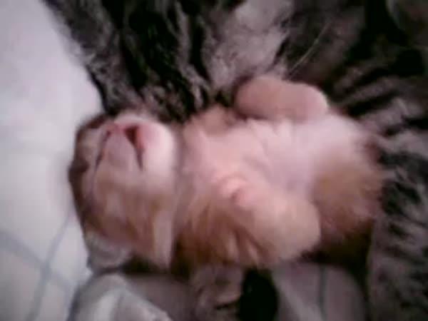 Nejroztomilejší kočičí video