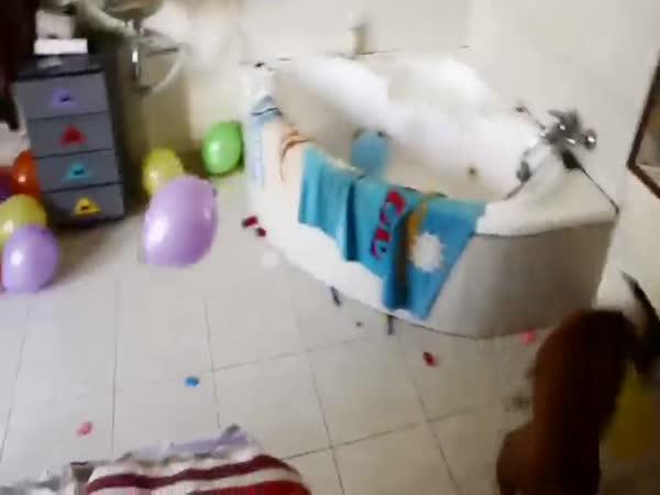 Pejsek má narozeniny - oslava