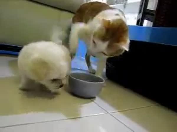 Štěně okusuje kočku
