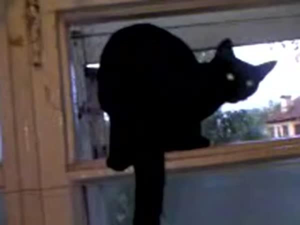 Kočka, která začala štěkat