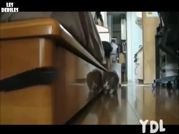 Kompilace koček a kočkování