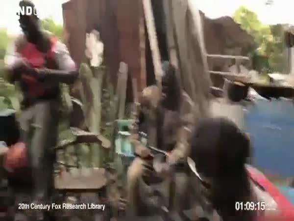 Opice s AK-47