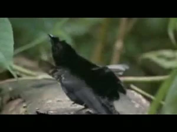 Nejhustější pták na planetě