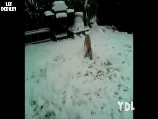 Největší blbci - psi