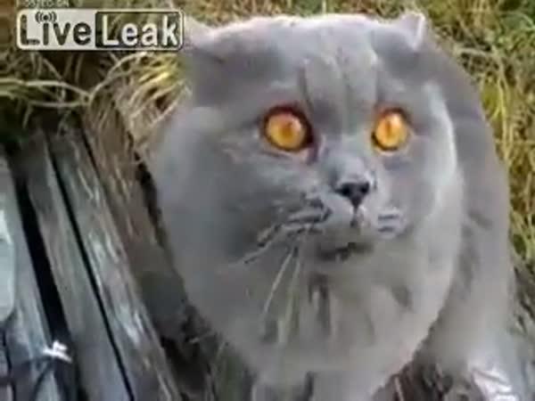 Rusky mluvící kočka