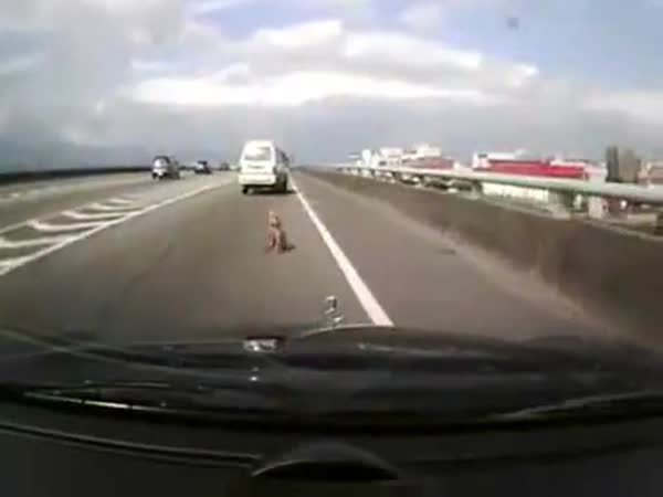 Pes vypadl za jízdy z okénka