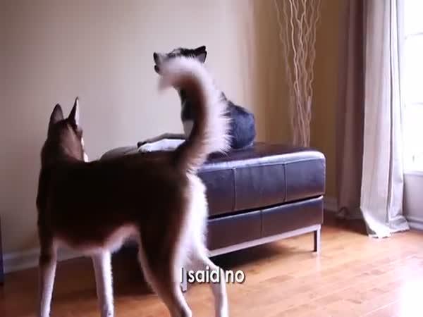 Psí hádka