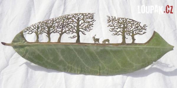 OBRÁZKY - Umění z listí