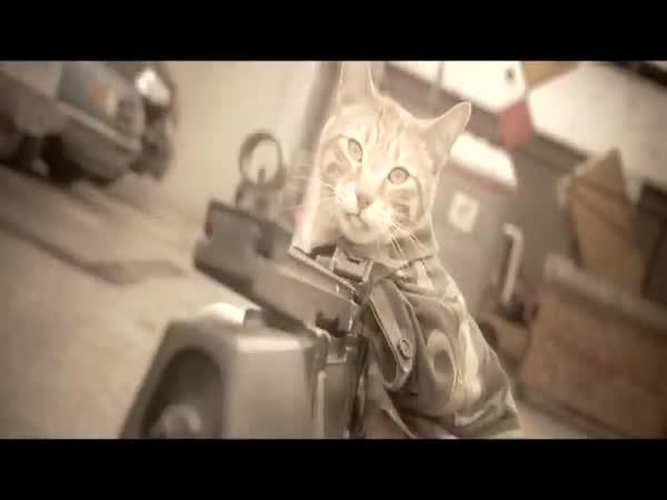 Statečná kočka