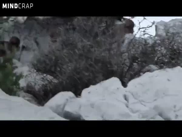 Opičí parkour