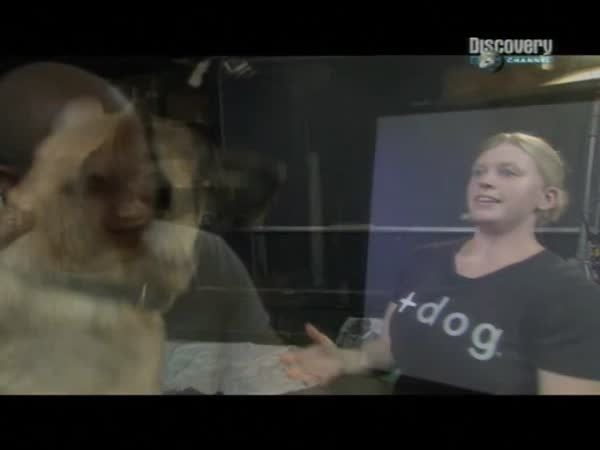 Slow motion - Pití psa