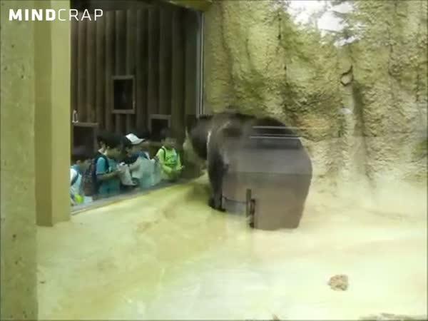 Medvěd - rapper ze zoo